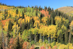 Fall colors. Mountains with fall colors in the background, Utah, USA Stock Photos