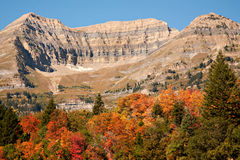Fall Colors on Mt. Timpanogos, Utah Royalty Free Stock Image