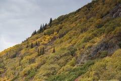 Fall colors near Tagish lake near the Klondike Highway in Yukon. Fall colors near Tagish lake near the Klondike Highway in Yukon Canada stock photo
