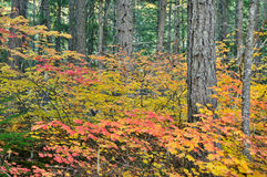 Fall Colors in North Cascades National Park Stock Photography