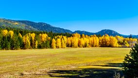 Fall colors at Boston Bar in BC Canada. Fall colors north of the town of Boston Bar along the Fraser Canyon route of the Trans Canada Highway, Highway 1, in royalty free stock images