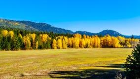 Fall colors at Boston Bar in BC Canada royalty free stock images