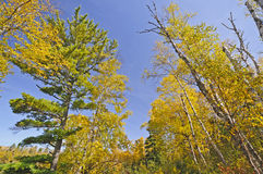 Fall Colors in the North Woods Stock Images