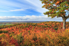Fall colors. In Ottawa Valley, Canada royalty free stock photos