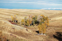 Fall colors. This is a photo of fall colors Royalty Free Stock Images