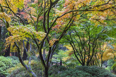 Fall Colors at Portland Japanese Garden stock images
