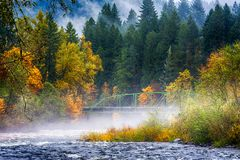 Fall colors along confluence of two rivers. Fall colors, rain and fog at the confluence of the Sandy and Bull Run rivers in Oregon. Bull Run is the primary stock photo