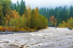 Autumn Rains along the Sandy River. Fall colors, rain and fog at the confluence of the Sandy and Bull Run rivers in Oregon. Bull Run is the primary source of stock photos