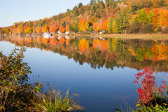 Fall Colors Reflected in Calm Lake with Foreground Bushes Stock Image