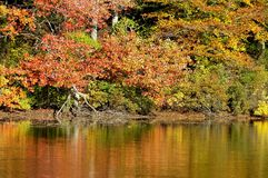 Fall Colors Reflected in Lake. Trees showing fall colors are reflected in a lake Royalty Free Stock Photo