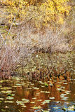 Fall colors are reflected in a pond in Indiana Royalty Free Stock Photo