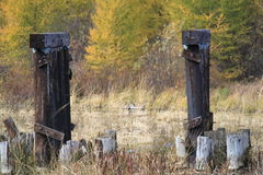 Close up view of abandoned bridge's load bearing posts amongst fall colors in Hayward, Wisconsin Royalty Free Stock Photos