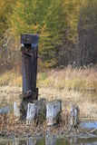 Close up of abandoned ruins of load bearing post from an old bridge, amongst fall colors in a Wisconsin meadow of Hayward Royalty Free Stock Image