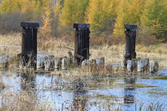 Close up view of abandoned ruins of an old bridge, which is situated in a river in a forest of Hayward, Wisconsin. Abandoned bridge amongst stunning autumn royalty free stock photos