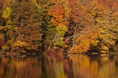 Fall Colors Reflecting Stock Images