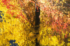 Fall Colors Reflections Abstract Royalty Free Stock Image