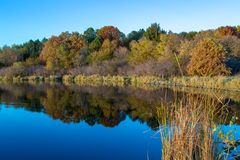 Fall colors with reflections in the lake and a tall grass on the right foreground. Lake Zorinsky Omaha Nebraska royalty free stock photo