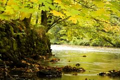 Fall colors on river banks. Fall foliage on trees along banks of river through forest on sunny day Stock Photography