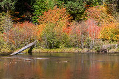 Fall Colors by River Stock Images