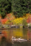 Fall Colors by River Royalty Free Stock Photos