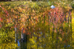 Fall Colors River Reflections Abstract Stock Images
