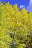 Fall colors in the Rocky Mountains, USA Royalty Free Stock Image