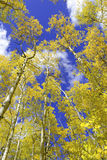 Fall colors in the Rocky Mountains, USA Stock Photography