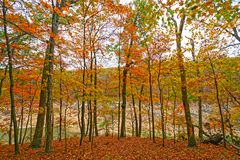 Fall Colors on a Secluded Ridge Stock Images