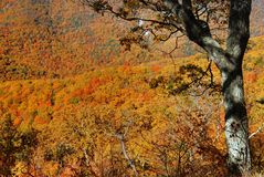 Fall Colors, Shenandoah Stock Photography