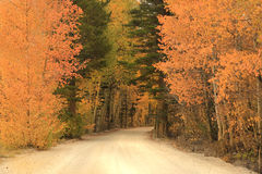 Fall Colors in the Sierra Mountains California Royalty Free Stock Photos
