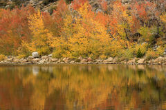 Fall Colors in the Sierra Mountains California Royalty Free Stock Photography