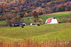 Fall colors of Sky Meadow National park. Farm house and a barn at Shenandoah Valley, Virginia Stock Photos
