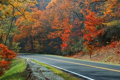 Fall Colors, Skyline Drive Royalty Free Stock Photo