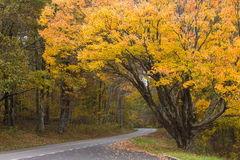 Fall colors, skyline drive Stock Image