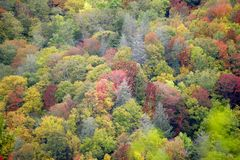 Fall colors in the Smokies Stock Image