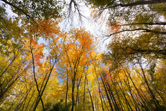 Fall Colors in the Smokies Royalty Free Stock Image