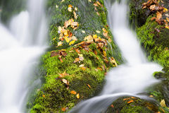 Fall Colors in the Smokies Stock Images