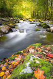Fall Colors in the Smokies Royalty Free Stock Photography