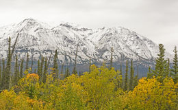 Fall Colors with Snow on the Mountains Royalty Free Stock Image