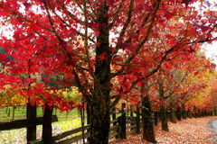 Fall Colors Sonoma Wine County Stock Photo