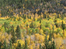 Fall Colors Spearfish Canyon Royalty Free Stock Photo
