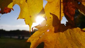 Fall colors. Sun shines through couple leaves Royalty Free Stock Photo