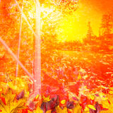 Fall colors in sunlight Royalty Free Stock Photos