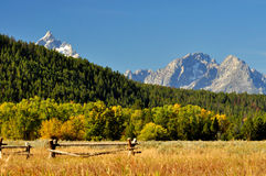 Fall colors surround a mountain in The Grand Tetons. Royalty Free Stock Photo