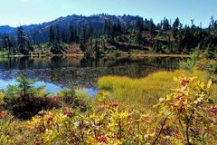 Stunning fall colors around Picture Lake in the North Cascades royalty free stock photography