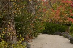 A Beautiful Autumn Walkway Among the Trees Stock Photo