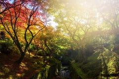 Fall colors at Tofukuji Temple, Kyoto Stock Photography