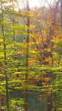 Fall colors in tree. Fall tree colors Royalty Free Stock Photo