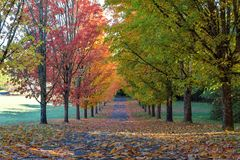 Tree Lined Street in Fall Color Oregon USA Stock Images