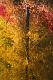 Fall Colors Tree Reflections Abstract Stock Image